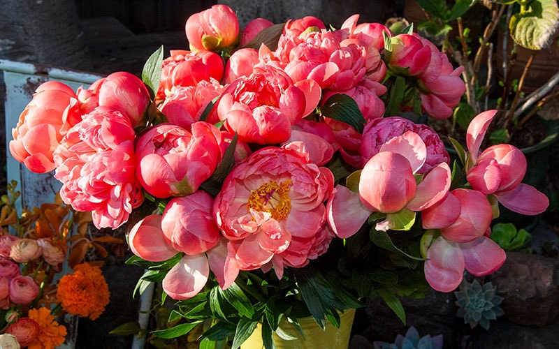 Ceramic container full of two dozen Peonies steal the show